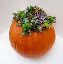 Image result for pumpkin with succulents