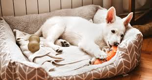 The 14 best <b>dog beds</b> of 2021, according to experts