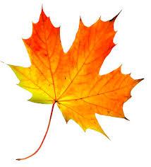 Image result for leaves in summer