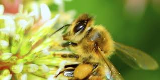 petition  President Obama   Honey Bees Need a Stronger Rescue Plan