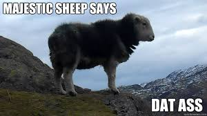 Majestic Sheep memes | quickmeme via Relatably.com