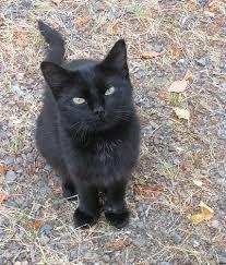 черный кот бездомный красивый грустный