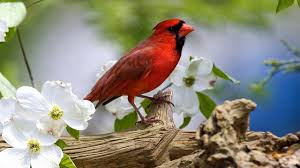 <b>Birds</b> are among the <b>flowers</b>, <b>beautiful</b>! (HD1080p) - YouTube