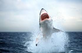 awesome shark in really high quality