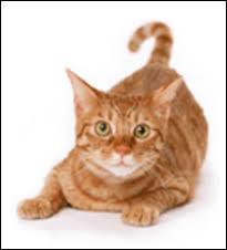 Петсайт.Ру интернет-магазин товаров для животных - Все для ...
