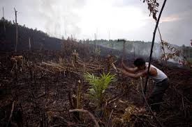 essay past present and future the road to a sustainable agri and the demand for sustainably sourced palm oil is low but these fires demanded a response and change was needed