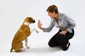 Image result for ترویج سگ بازی در خانواده