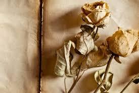 Resultado de imagen de fotos de flores secas