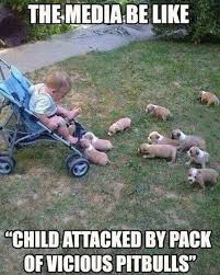 Child attacked by a pack of vicious pitbulls | The Memes Factory ... via Relatably.com