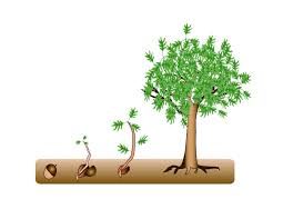 Image result for images for sapling growing from seed