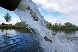 Image result for CA trout fish stocking program picture