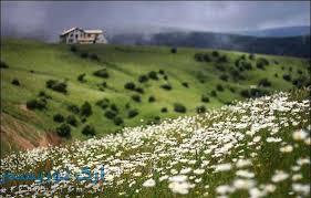نتیجه تصویری برای مناطق رویش گل بابونه