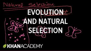natural selection org