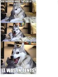 Husky Memes on Pinterest | Pun Dog, Pun Husky and Puns via Relatably.com