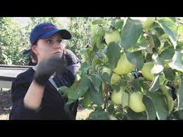 Агропак - оборудование и упаковочный материал для овощей и ...