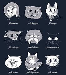 Types of Internet cats - The Meta Picture via Relatably.com