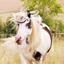 heart bathroom cabinets barbaraneil  ways to braid your horses mane