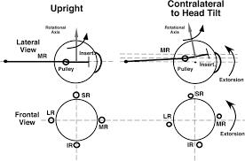 articles journal of neurophysiology figure