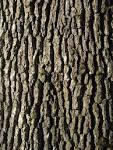 oakbark
