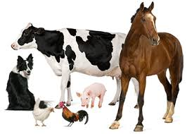 Image result for animal nutrition
