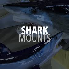 shark mounts fishmounts mounted fish fish replicas fish paint custom shark mounts incredible detail and colors and textures so vibrant and realistic you think it s a live shark in order to reproduce
