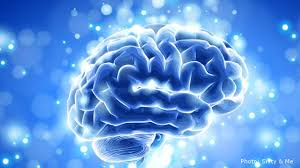 Image result for Scientists Have Discovered a New Activity in Brain Our Cells