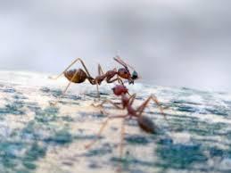 Contractor Ants London Ontario