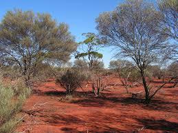 Image result for scrub Australia