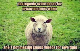 FunniestMemes.com - Funniest Memes - [Photogenic Ovine Poses For ... via Relatably.com