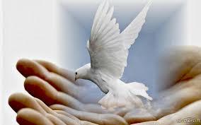 """Résultat de recherche d'images pour """"colombe de la paix"""""""