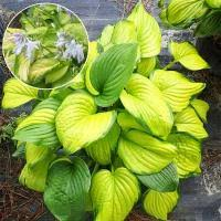 Декоративно-лиственные <b>растения</b> купить недорого в Санкт ...