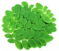 Image result for moringa