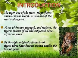 essay on save tigers in  words   essay for you essay on save tigers in  words   image