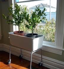 doors indoor t decoration ideas amazing plant for brochure design ideas stage design ideas amazing office plants