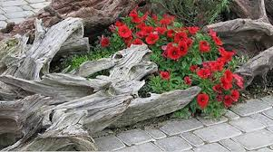 Image result for driftwood in landscaping