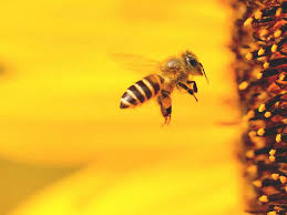 8 <b>Benefits</b> of <b>Bee Pollen</b>: Nutrition Facts and More