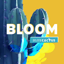 Bloom by Blue Cactus