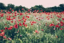Imagini pentru flowers tumblr