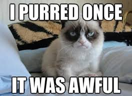 Grumpy Cat has made its owner £64million | Daily Mail Online via Relatably.com