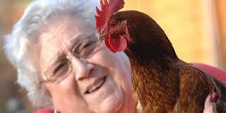 How About News-Pasangan Inggris menyaksikan hewan peliharaannya, Gertie si ayam betina, perlahan berubah menjadi ayam jago. Ayam ternyata bisa mengalami ... - ayam-betina-menjadi-jago