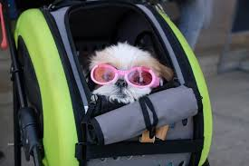 The 25 Best-Rated Dog Strollers of 2020 - Pet Life Today