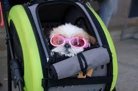 waterproof foldable pet dog car safe seat carrier hammock blanket handbag doghouse supplies