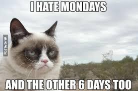 Grumpy-Cat-Memes-01.jpg via Relatably.com