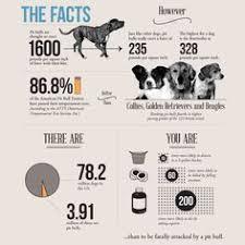 Products: лучшие изображения (7840) | Товары для животных ...