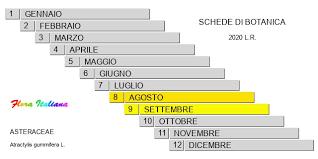 Atractylis gummifera [Masticogna laticifera] - Flora Italiana