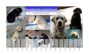 puppies for flyers arewpeagiueo blog hr puppies for flyers