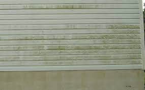 Image result for black mold on exterior house