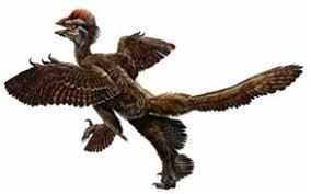 الطيور البدائية كانت تطير بأربعة أجنحة..~ Images?q=tbn:ANd9GcTIRMlq_-PF6g0J4YqVb1hPBLx8PQuXTary9DIV4qkiaKUkWQSZ