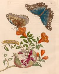 a th century w artist s butterfly journey