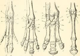 horses toe-nails